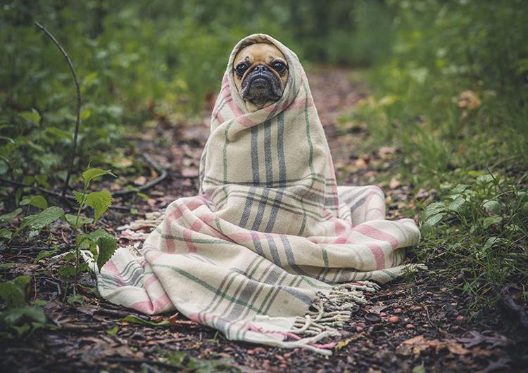 犬服の生地を探して・・・