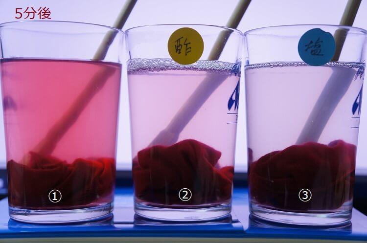 塩、酢の色止め効果の実験