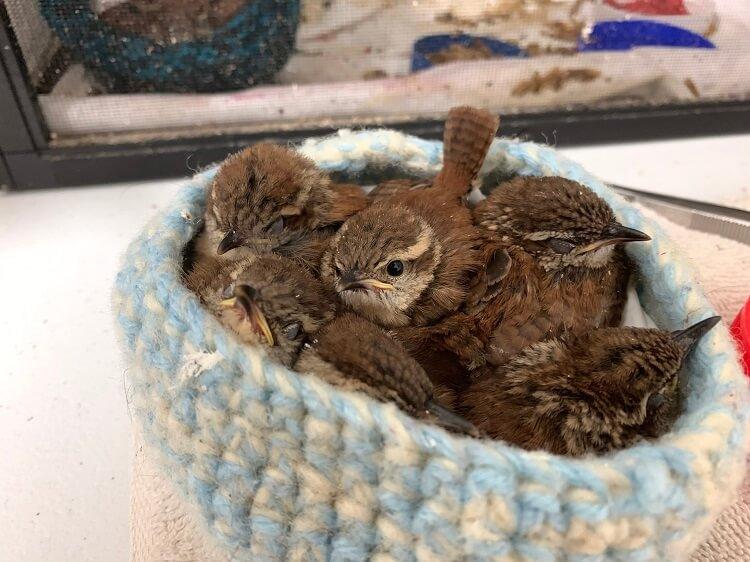 手編みの鳥の巣を届ける会